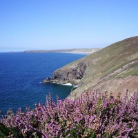 cliff-top-heather